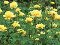 Цветы для срезки: популярные срезочные растения