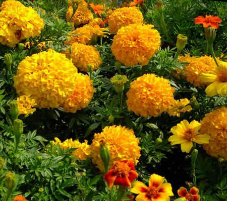Бордюрные цветы и растения многолетники: фото в каталоге и 75