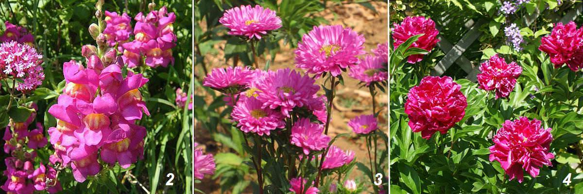 цветы на срезку названия и фото