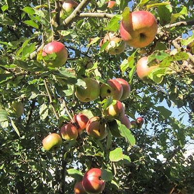 Работы на огороде и в саду в сентябре фото
