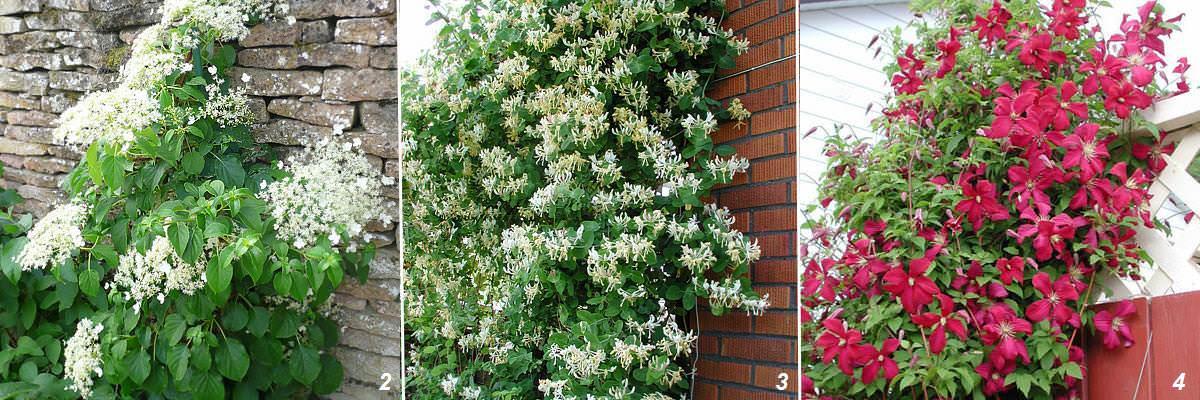 Садовые цветы - Названия садовых цветов - Мир садовых цветов | 400x1200
